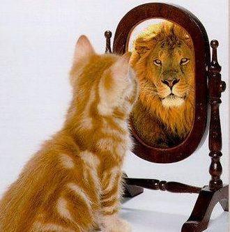 Pussy Lion